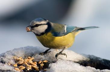 Bien choisir les nourritures pour oiseaux